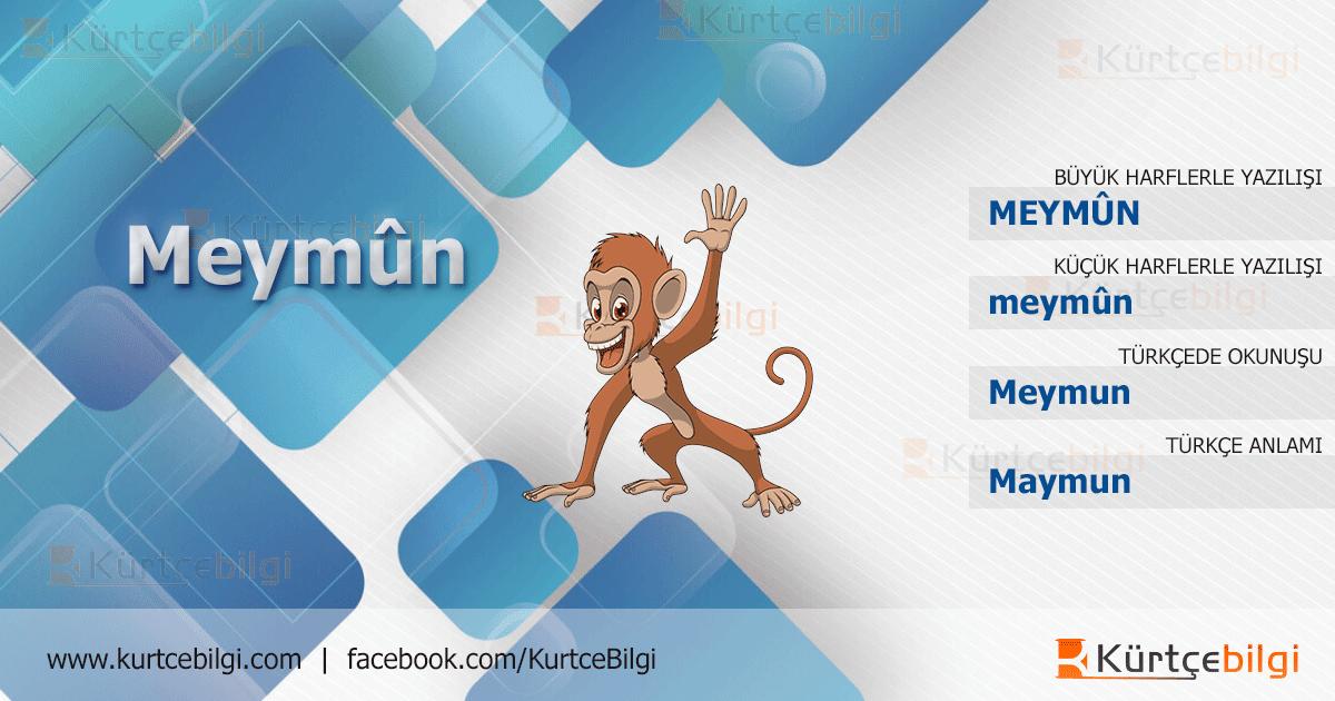 Maymun Kürtçe Resmi